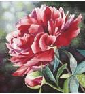 Tessuto Gobelin - Riquadro 45x45 Flowers2